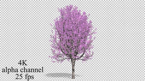 Thumbnail for Flowering Tree