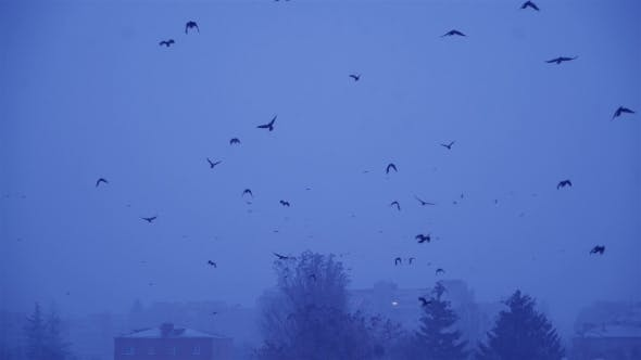 Thumbnail for Flock of Birds in the Gloomy Sky. Cold Winter Evening