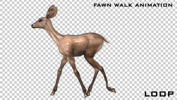 Thumbnail for Baby Deer - Fawn Walk Animation