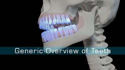 Generic Overview Of Teeth