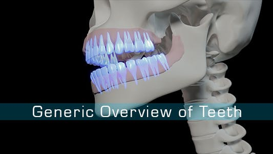 Thumbnail for Generic Overview Of Teeth