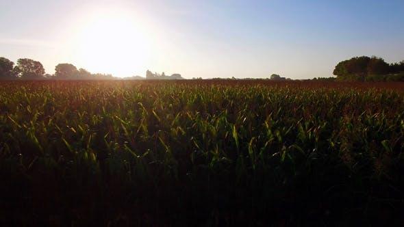 Thumbnail for Great Corn Fields Farmland at Sunrise
