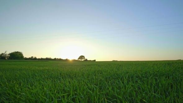 Sunlight Over Green Field