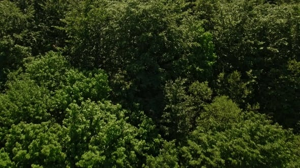 Thumbnail for Aerial View Over Forest