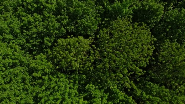 Cover Image for Drone Over Lush Forest