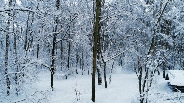 Thumbnail for Snowy Branches in Forest - Winter Fairy Background
