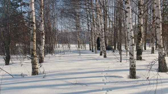 Cover Image for Man in Winter Clothes Fast Riding on Mini Snowmobile on Deep Snowdrifts in the Forest