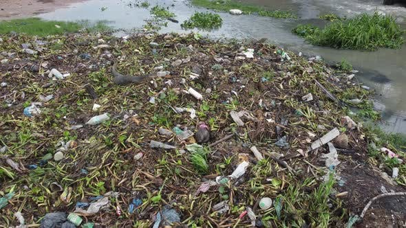 Monitor lizard searching food at the pile of rubbish dump