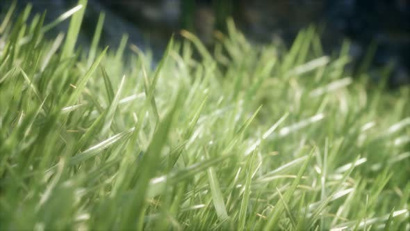 Thumbnail for Fresh Green Grass on the Forest