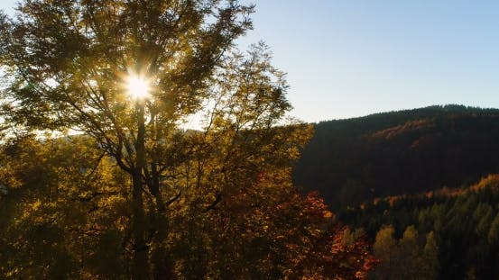Thumbnail for Aerial View Sunrise, Sunset Over of Forest