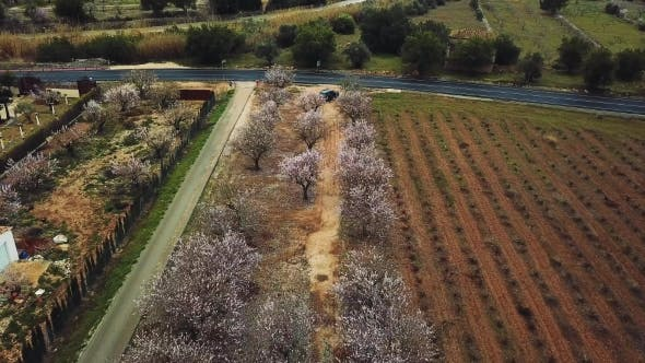 Cover Image for Almond Blossom in the Province of Alicante in February 2018 in Spain