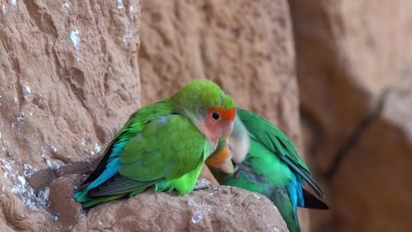 Thumbnail for Small Parrot in the National Park