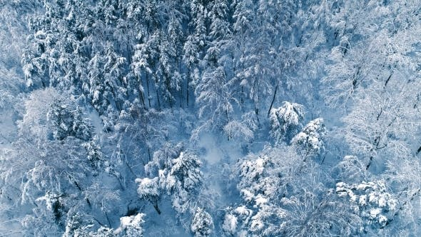 Cover Image for Snowy Branches in Forest. Winter Fairy Background