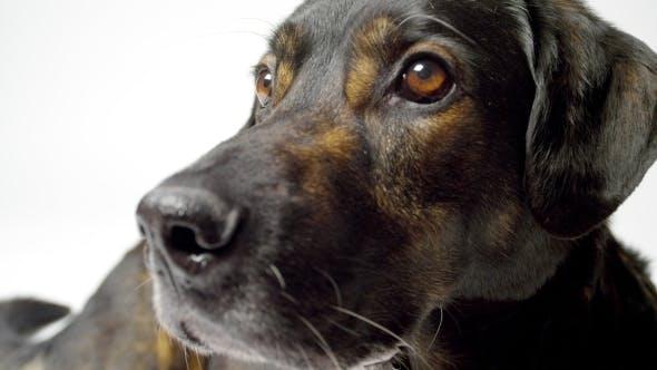 Thumbnail for Alert Dog