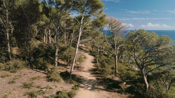 Thumbnail for Aerial Inspiring Shot of Amazing Forest Trail Path