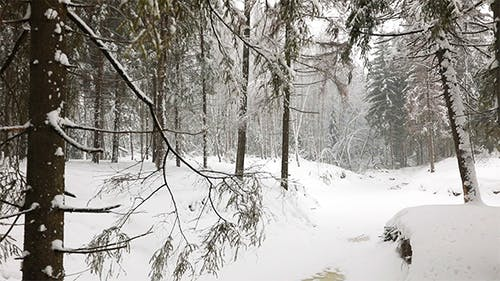 Panoramic View of Winter Forest