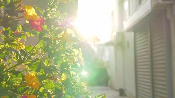 Thumbnail for Blühender Strauch im Licht der hellen Sonne