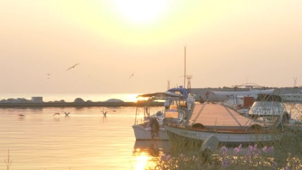 Thumbnail for Marine Scene with Harbour and Sea-gulls at Sunset