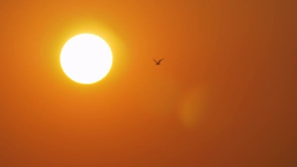 Thumbnail for Golden Evening Sun and Flying Sea Gull