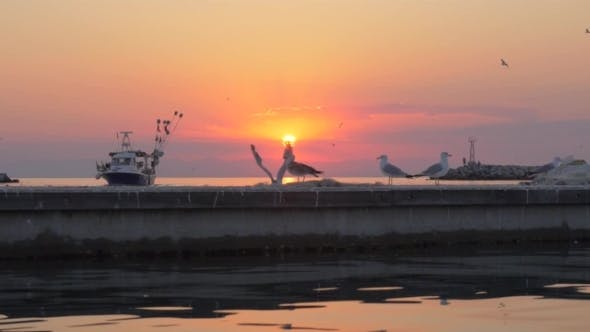 Thumbnail for Seagulls and Boat in the Sea, Sunset Marine Scene