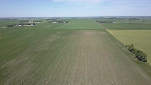Minnesota Beans Soybeans Row Crop Farms and Farmland or Cropland