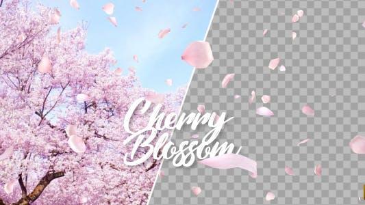 Thumbnail for Cherry Blossom Falling