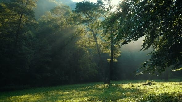 Thumbnail for Sunbeams Through the Forest Trees Branches at the Sunrise Time