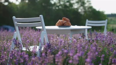 Croissants on Table in Lavender Field