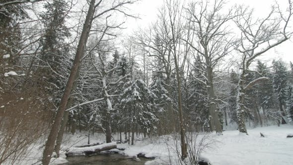 Thumbnail for Small Creek in Winter Snowy Forest Among Snow Banks.