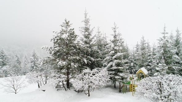 Thumbnail for Winter Carpathian Landscape, Christmas Trees in the Snow