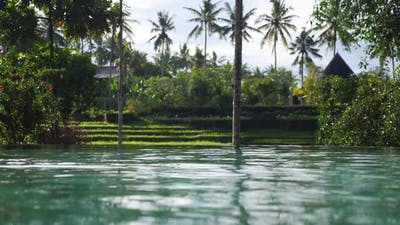 Shot From the Swimming Pool with the View of Tropical Garden