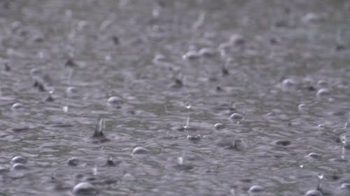 Large Drops of Rain Fall in a Puddle During a Rainstorm