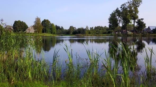 Homes Are Located around the Lake with Reeds