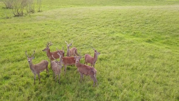 Thumbnail for Group of Deer Stands and Looks around Then Begins to Run