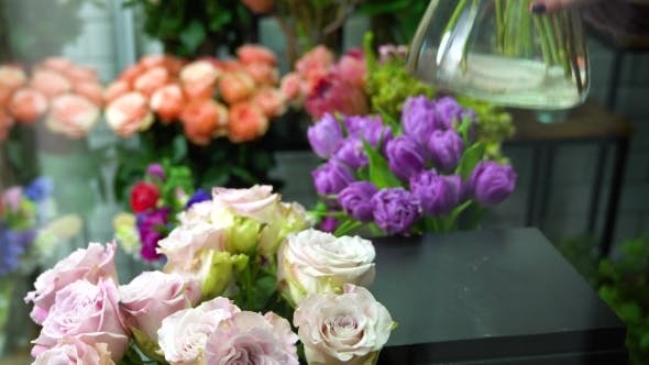 Thumbnail for Florist Arranging Flowers in the Flower Shop. Placing Beautiful Lilac Roses in the Front.