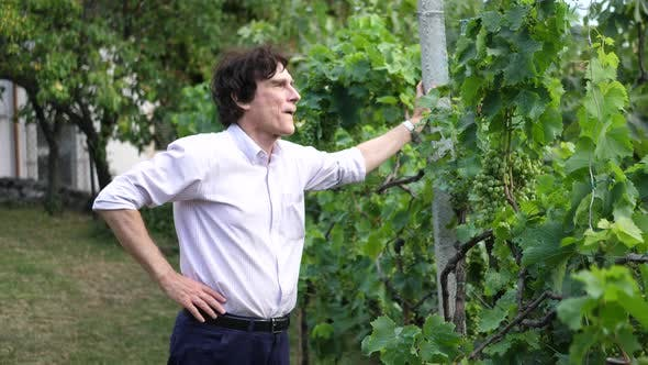 Thumbnail for Portrait of a retired professor teacher in a garden checking grapes on a vine