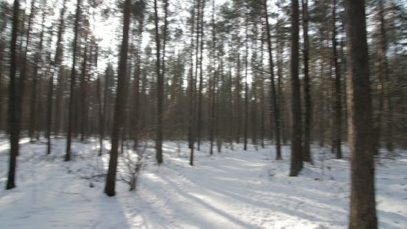 Thumbnail for Panorama of the Winter Forest.