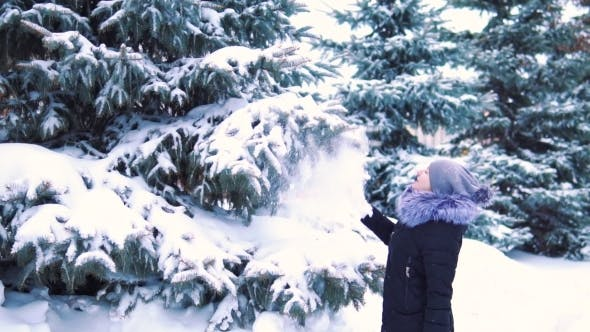 Thumbnail for Winter Snow Falls Slowly From a Tree, a Girl Touches Tree Branches, Snow Falls