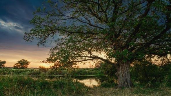 Thumbnail for Misty Bog Before the Sunrise