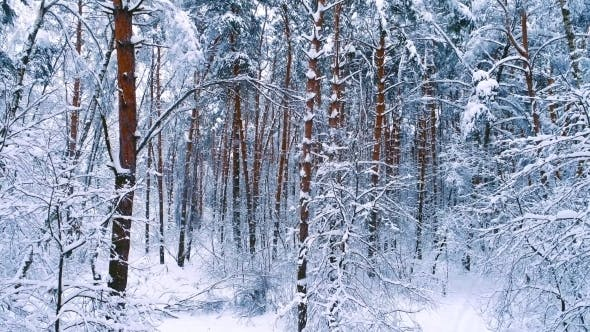 Thumbnail for Snowy Branches in Forest Winter Fairy Background