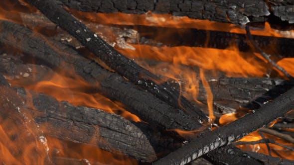 Thumbnail for Forest Brush Fire Burning