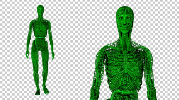 Thumbnail for Wired Green Anatomy Walk Animation