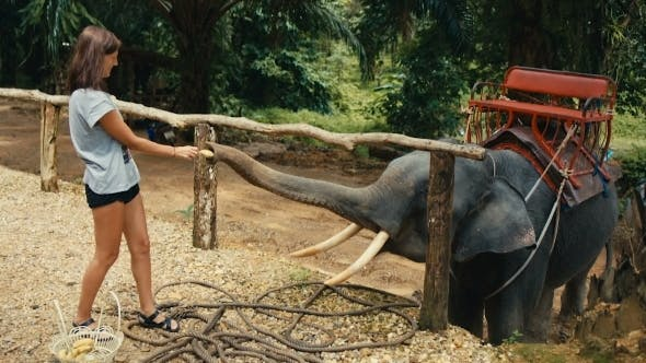 Thumbnail for Woman Feeding the Elephant a Banana