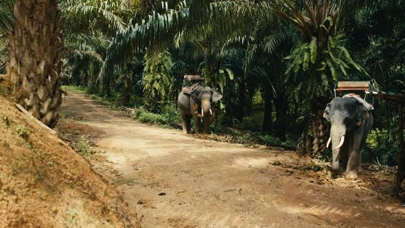 Thumbnail for Two Asian Elephants in the Shade of the Jungle