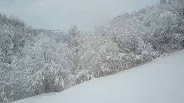 Winter Forest Covered with Snow. Winter Alpine Meadow - White Hills