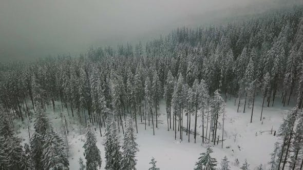Thumbnail for Flight Over Snowy Spruce Mountain Forest in Winter Whit Faling Snow