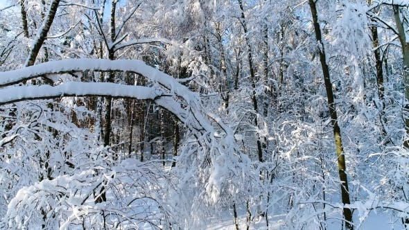 Cover Image for Snowy Branches in Forest Winter Fairy Background