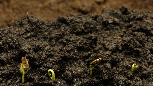 Thumbnail for Growing Plant Agriculture