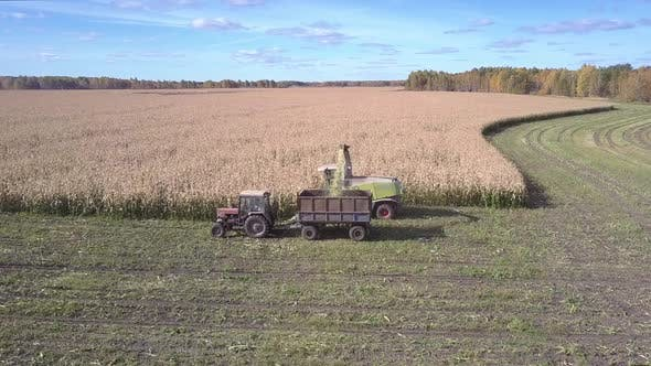 Thumbnail for Upper View Tractor with Trailer Gathers Harvested Corn Mass