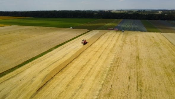 Thumbnail for Combine Harvester On A Wheat Field